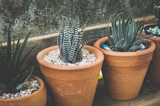 Jakie doniczki do przesadzanych roślin?
